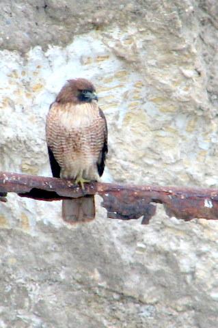 Hawk Close